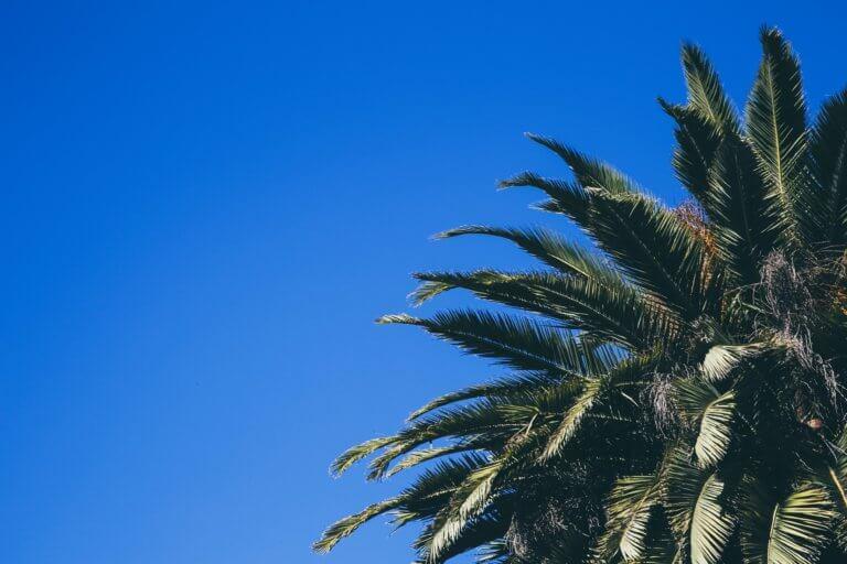 palm tree with blue sky 在youtube及各大網路社群媒體視頻裡, 人們除了會受標體跟內容感興趣外,色彩也是點擊的動機之一。 什麼風格裡出現哪種顏色,又或是品牌(產品)主打什麼顏色來宣傳, 有時,單純的顏色就給人們充滿聯想,甚至影響了我們的感官, 就像之前美食攝影介紹當中, 需要的是色彩是暖色的、給人充滿食慾感的。 例如:草莓系列的商業廣告產品視頻,大多都會搭配粉紅色或是紅色, 給人帶點酸甜的甜蜜感,在女性消費者上,也是最受歡迎。 色彩給人的心理影響是具有影響力的, 而研究透過色彩影響心裡的領域稱為色彩心理學。 在本文中,將提供有關視頻製作時應該了解的色彩心理學的簡要概述。 只需知道它們的特徵,就可以用完全不同的方式查看通常會出現在您眼中的顏色。 此外,了解色彩心理可以實現有效的視頻製作,從而鼓勵用戶採取特定的行動。 讓我們深入了解色彩世界。