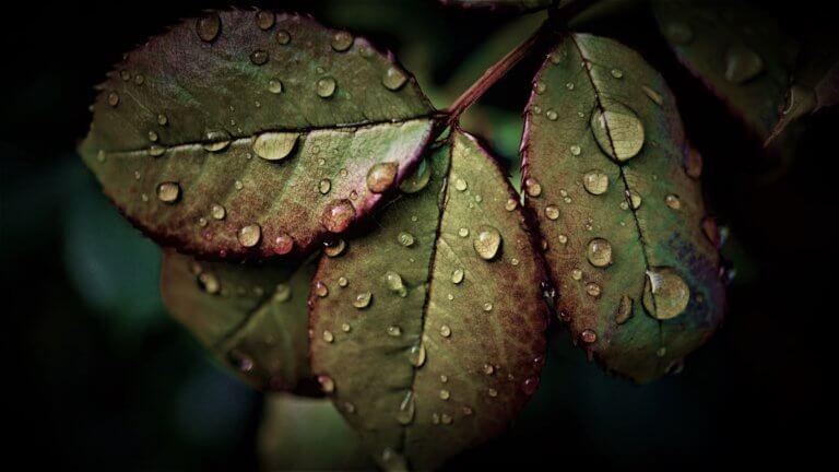 rainy weather 5259544 1920 它,能夠是充滿喜悅,也能帶點憂傷,有著無限想像在雨中拍攝裡, 因為雨,正是給攝影師最奇妙的禮物。 雨水帶來了無數的創作機會(可室內和室外) 瞭解了雨天攝影,不再感到雨天只是惡劣的天氣,還會多了些冒險及挑戰。 甚至很多客戶都喜歡雨中拍攝下的作品,如同微電影中很多的劇情需要, 也都免不了在雨中拍攝mv。 雨中的天氣下拍攝,是會令人難忘的, 但雨中攝影也可能會使大多數攝影師驚慌失措, 有些人寧願等天氣好後再進行戶外冒險,但其實根據自己的居住地, 當下雨時,它正改變著城鎮或城市不同以往的面貌。 在活用雨中攝影技巧下,可以使雨中最普通的場景看起來很生動, 攝影師將用獨特方式捕捉世界的渴望,遠勝於保持舒適和溫暖的需求。