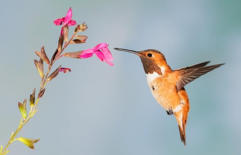 hummingbird 5255827 1920 所有的活動拍攝如何捕獲光由三個組成曝光三角形的變量決定。 什麼是曝光三角形?如何使用其三個設置中的每一個來捕獲圖像? 在本文中,將深入研究創建圖像曝光的三個要點, 這邊還將查看一個曝光三角圖, 可以將其保存為參考方便創建自己所設想的圖像。