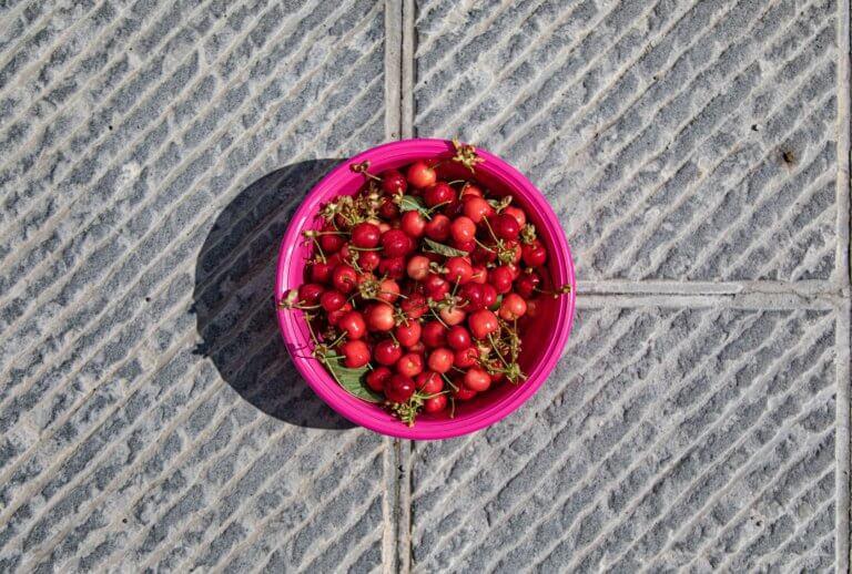 pink bowl of cherries on the ground 對比跟對稱攝影一樣,在我們的生活中無處不在, 如:令人垂涎的餐點攝影、還是自然界的美麗花草、新鮮蔬果甚至動物身上的纹路...等, 而透過強烈的對比拍攝,不管是在Instagram圖片還是Youtube影片都更容易給人留下深刻的印象。 在本文中,將研究色調對比和色彩對比之間的區別, 另外還分析曝光在高對比度圖像中的作用, 最終,了解可用於創建自己的獨特,高對比度照片的技術。