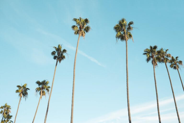 "palm trees 1209185 1920 拍攝快照,有著""取景器中反映內容之間的關係"" 而攝影取景時,總免不了會去隨拍,但拍攝這些零碎畫面,其實也能有故事跟質感, 即便是隨拍在Instagram也能夠成為人氣王呢! 懂得看圖的人不僅會意識到顯眼的部分,還會意識到它與背景之間的關係,這更是所有活動攝影及錄影的基本! 而將日常拍攝出質感,並不侷限在室內造景,隨處可有,在這邊將透過7個觀點來傳述隨拍技巧。"
